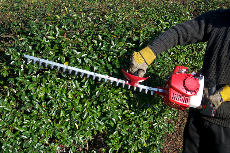 hedge-trimming-1